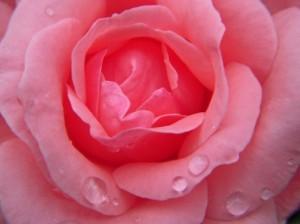 小山市アレスト薔薇色の休日プラン